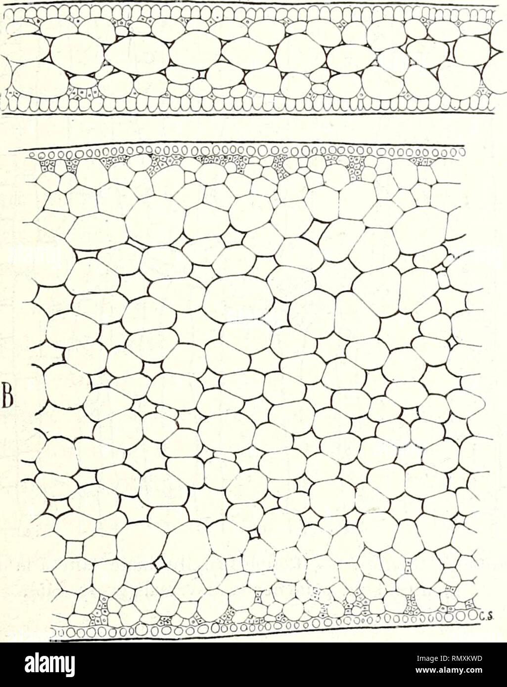 Annales des sciences naturelles botaniques feuilles des moinocotylédones aquatiques 163 ire fig