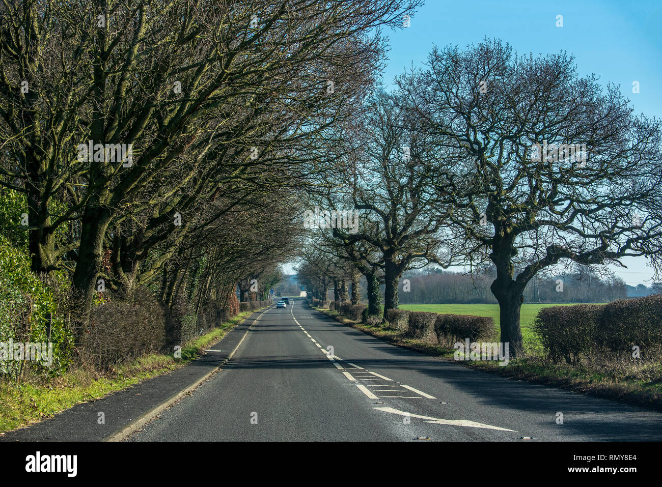 Country section of the A50 trunk road at Warrington. Treelined - Stock Image