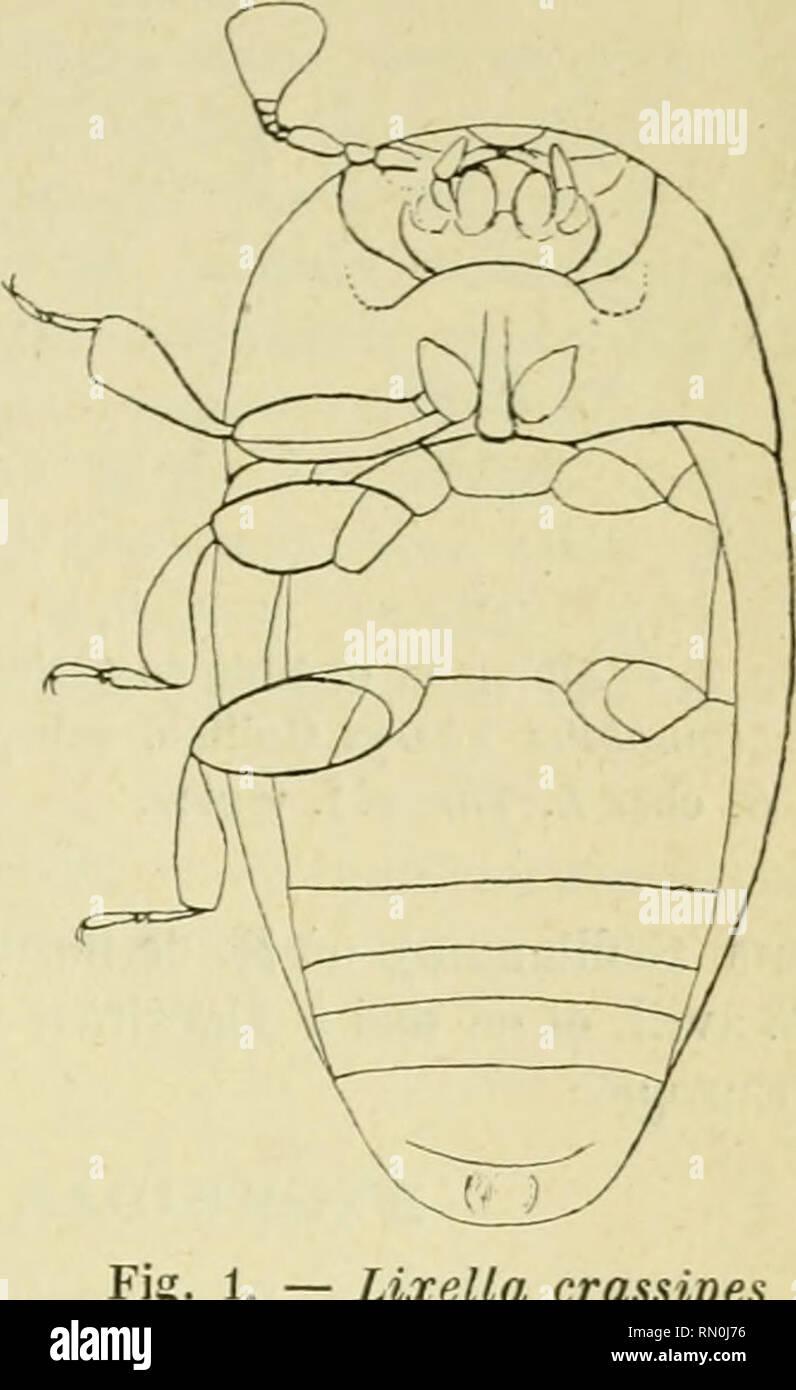 262e7dc27 Annales de la Société entomologique de France. Insects; Entomology.  youreau.r .