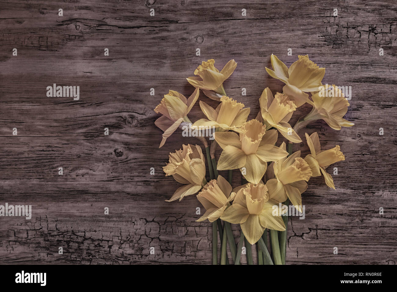 Flat lay of daffodils on a wooden surface, representing a heart - Stock Image