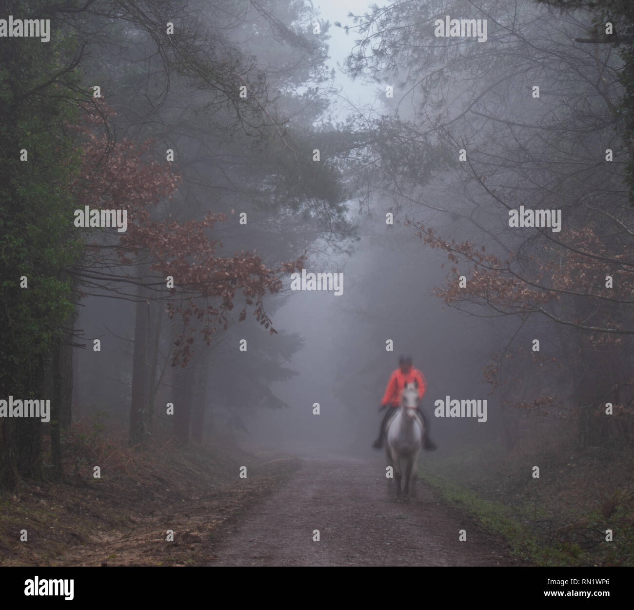 Trinity Hill, East Devon, UK. 16th February 2019. UK Weather:  Thick fog envelopes the woodland at East Devon beauty spot, Trinity Hill. A woman in a bright jacket rides along the bridle path in thick fog. Credit: Celia McMahon/Alamy Live News - Stock Image