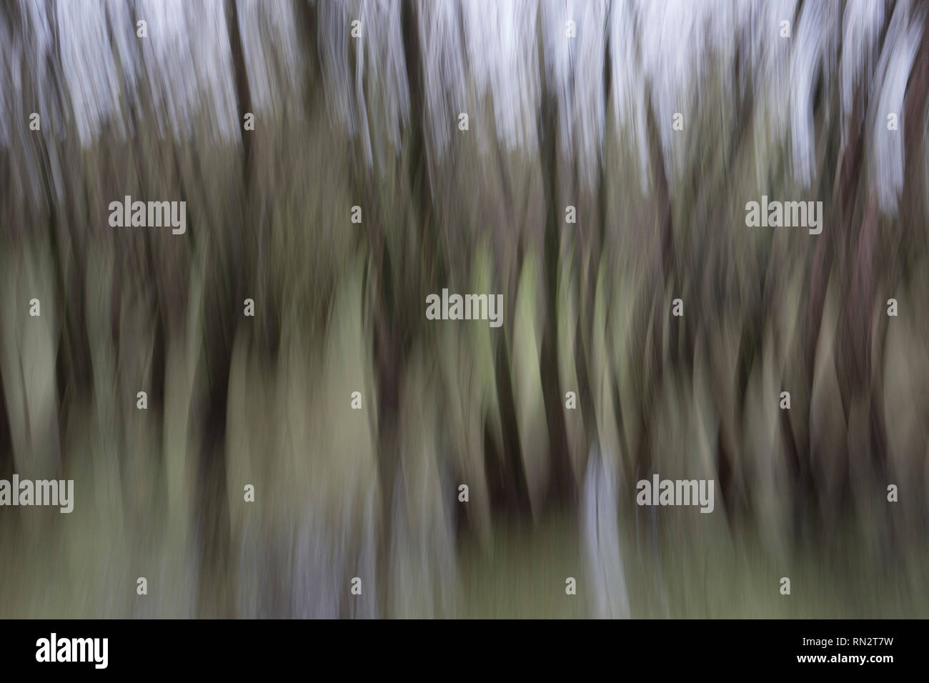 Abstract motion blurred dark gloomy trees in woods - Stock Image