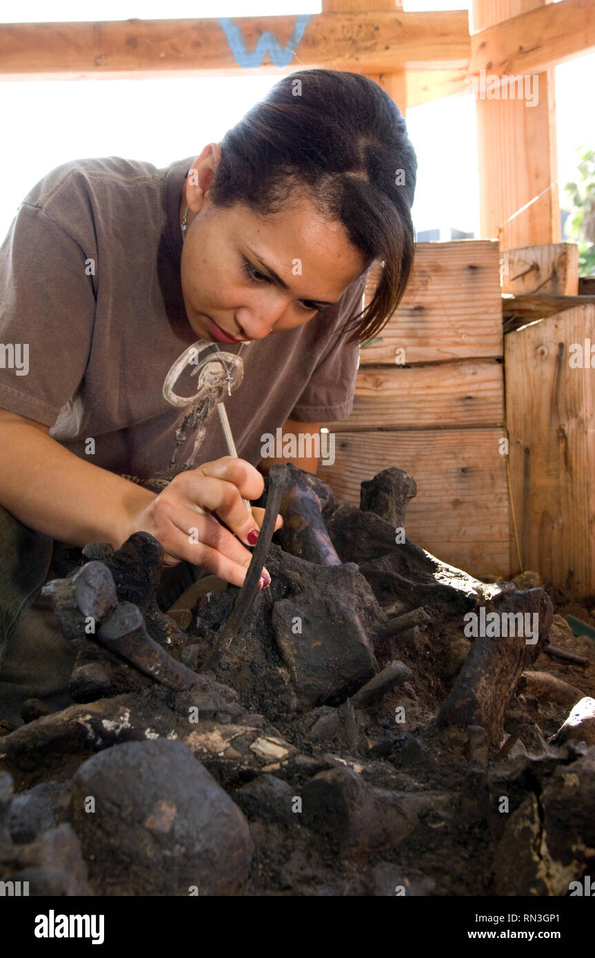 Worker removing tar from around fossil remains at the La Brea Tar Pits in Los Angeles - Stock Image