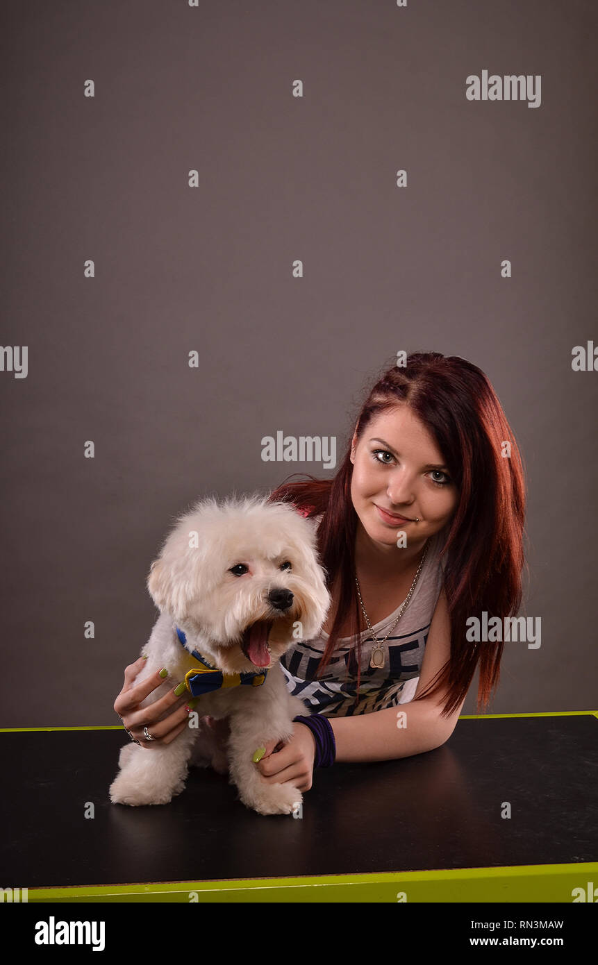Yawning Maltese dog with blue and yellow ribbon and cute redhead teenage girl - Stock Image