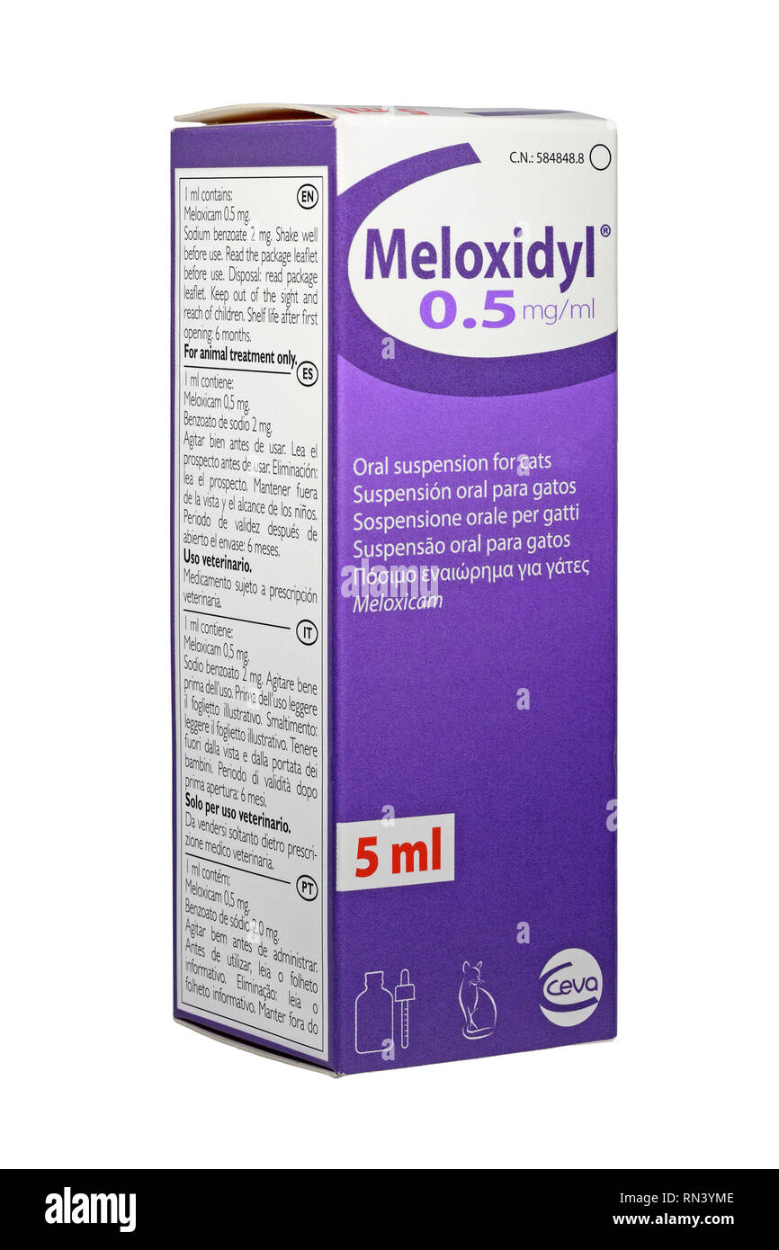 Meloxidyl 0.5mg/ml oral suspension for post operative pain relief for cats. - Stock Image