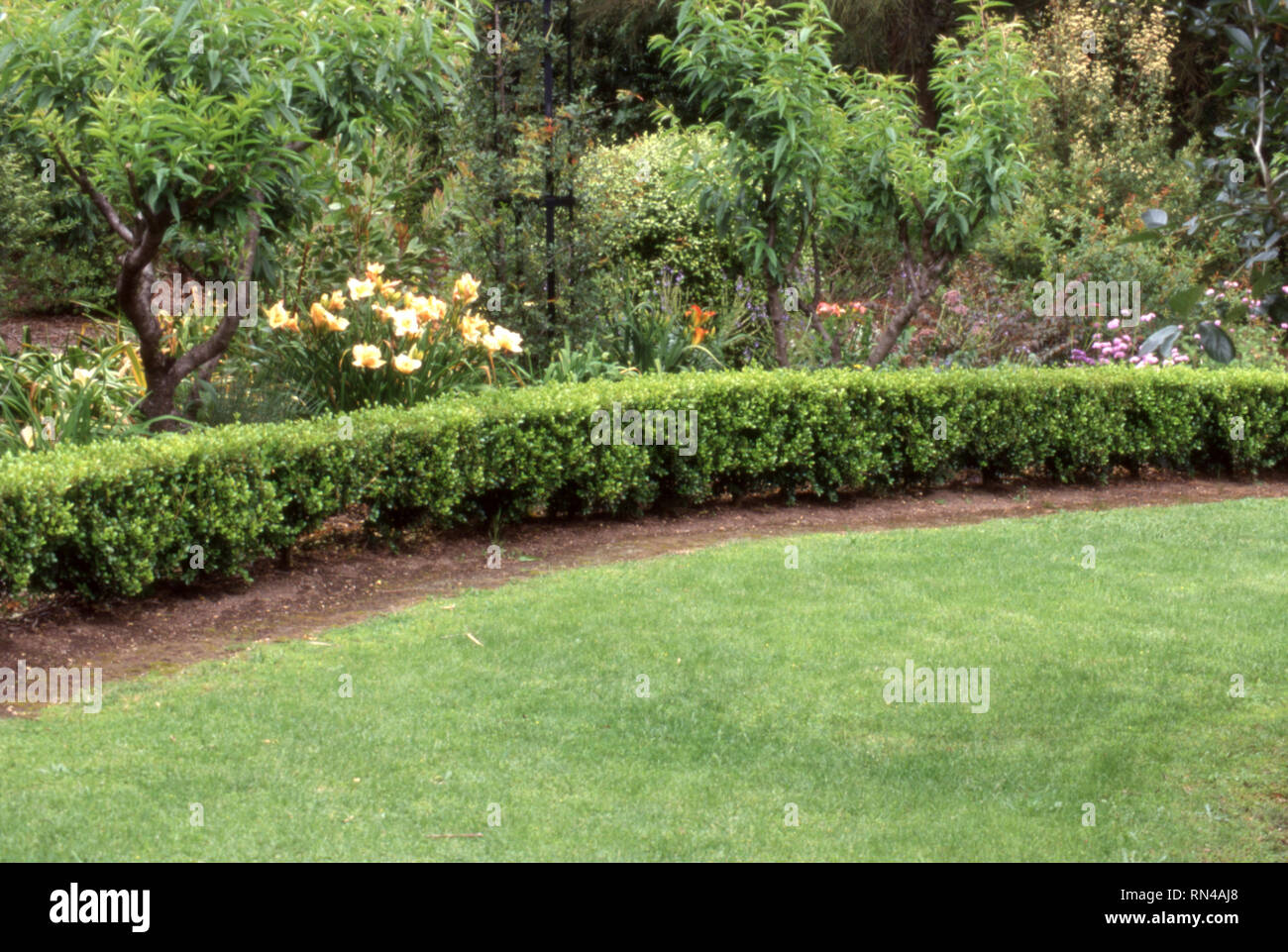 NEW SOUTH WALES GARDEN WITH HEDGING (BOX) AND DAY LILIES BORDERING LAWN AREA, NEW SOUTH WALES, AUSTRALIA. - Stock Image