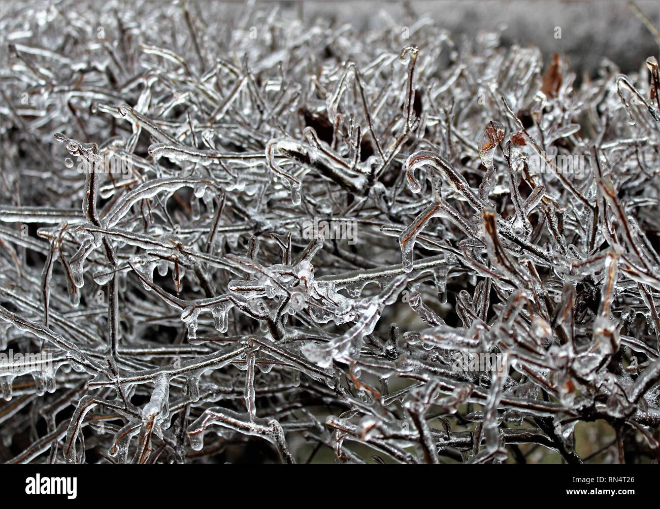 Ice covered trees in London, Ontario, Canada - Stock Image