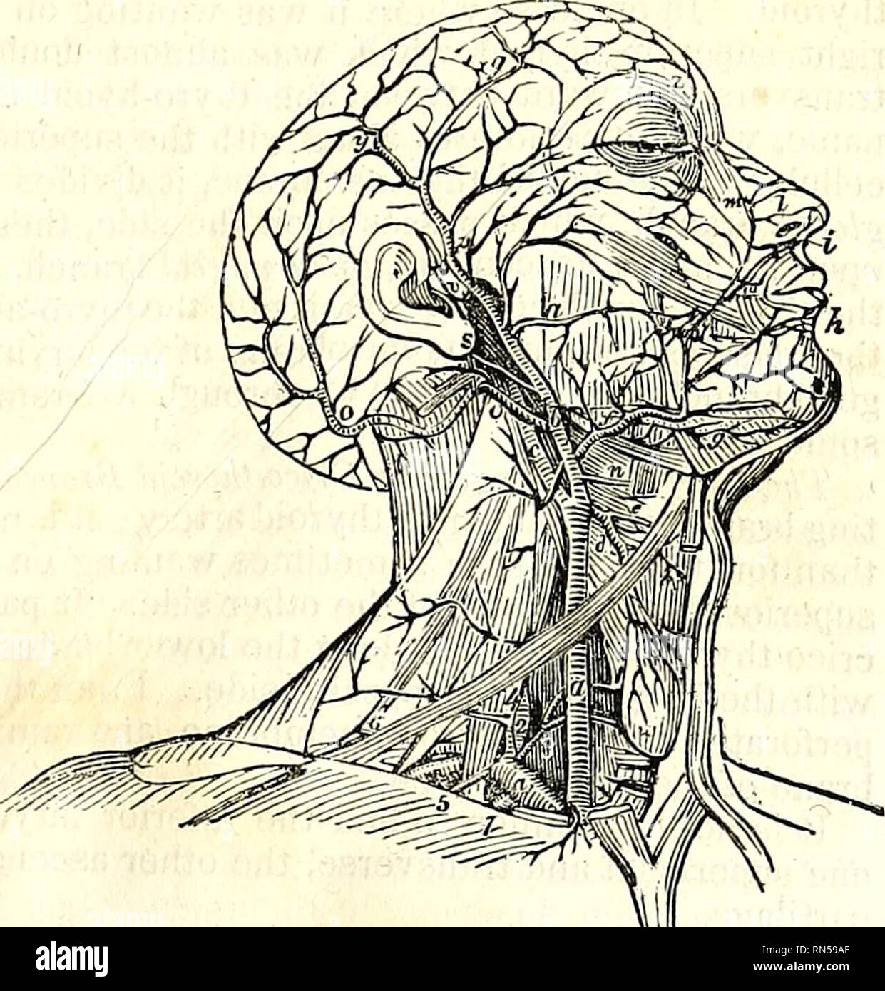 The Anatomy Of The Human Body Human Anatomy Anatomy The External