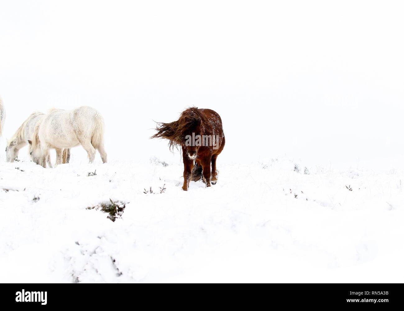 Winter wonderland in Dartmoor National Park - Stock Image