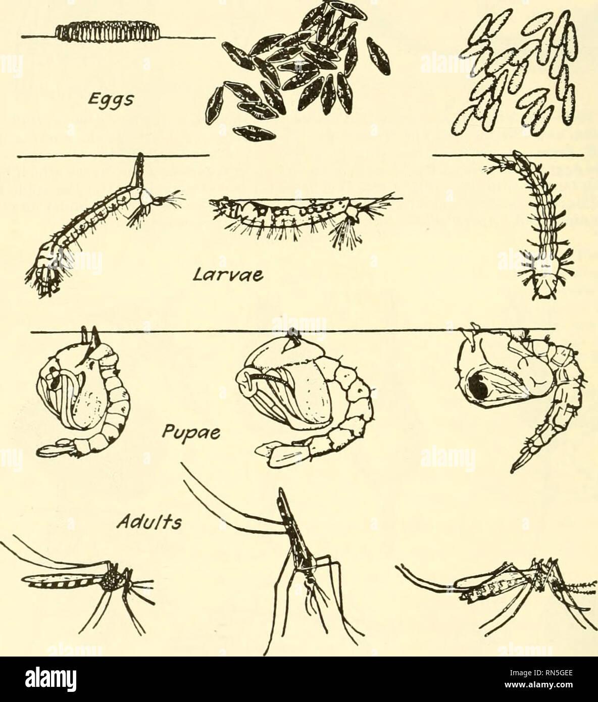 Animal biology  Zoology