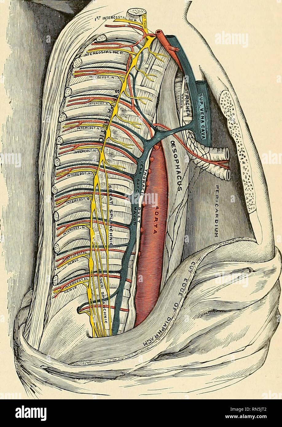 Mediastinal Lymph Nodes Chest Lym Jpg Galleryneed