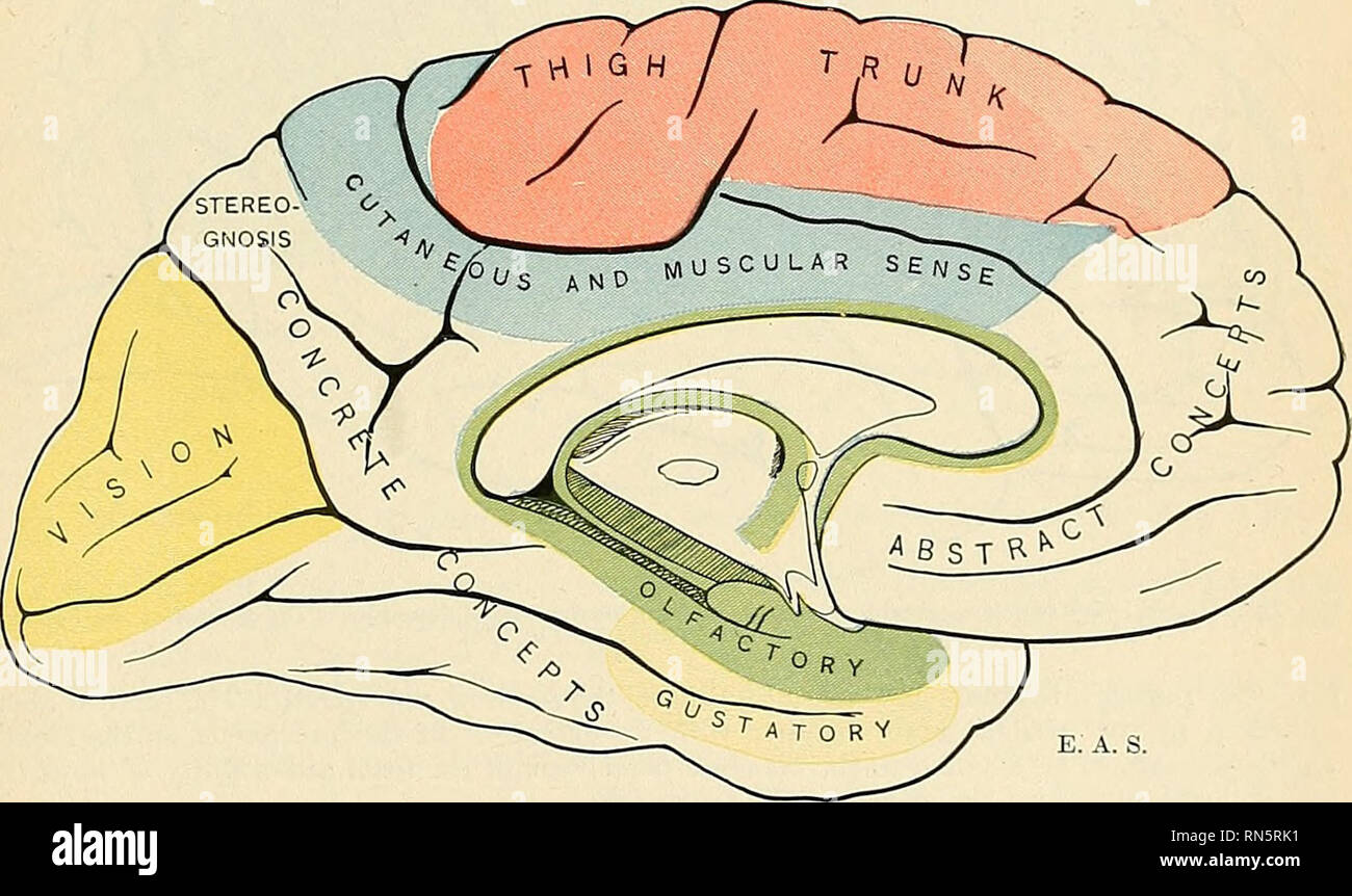 Localization Of Brain Function Stock Photos Localization Of Brain