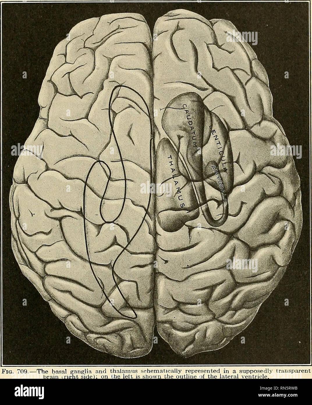Anatomy Descriptive And Applied Anatomy The Cerebral Hemispheres