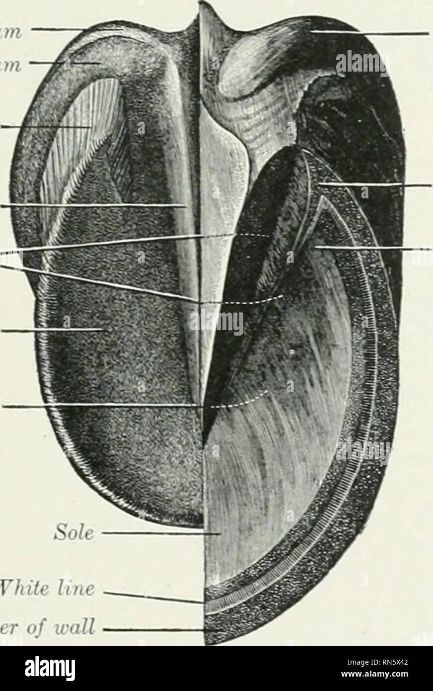 The Anatomy Of The Domestic Animals Veterinary Anatomy Cartifiigc