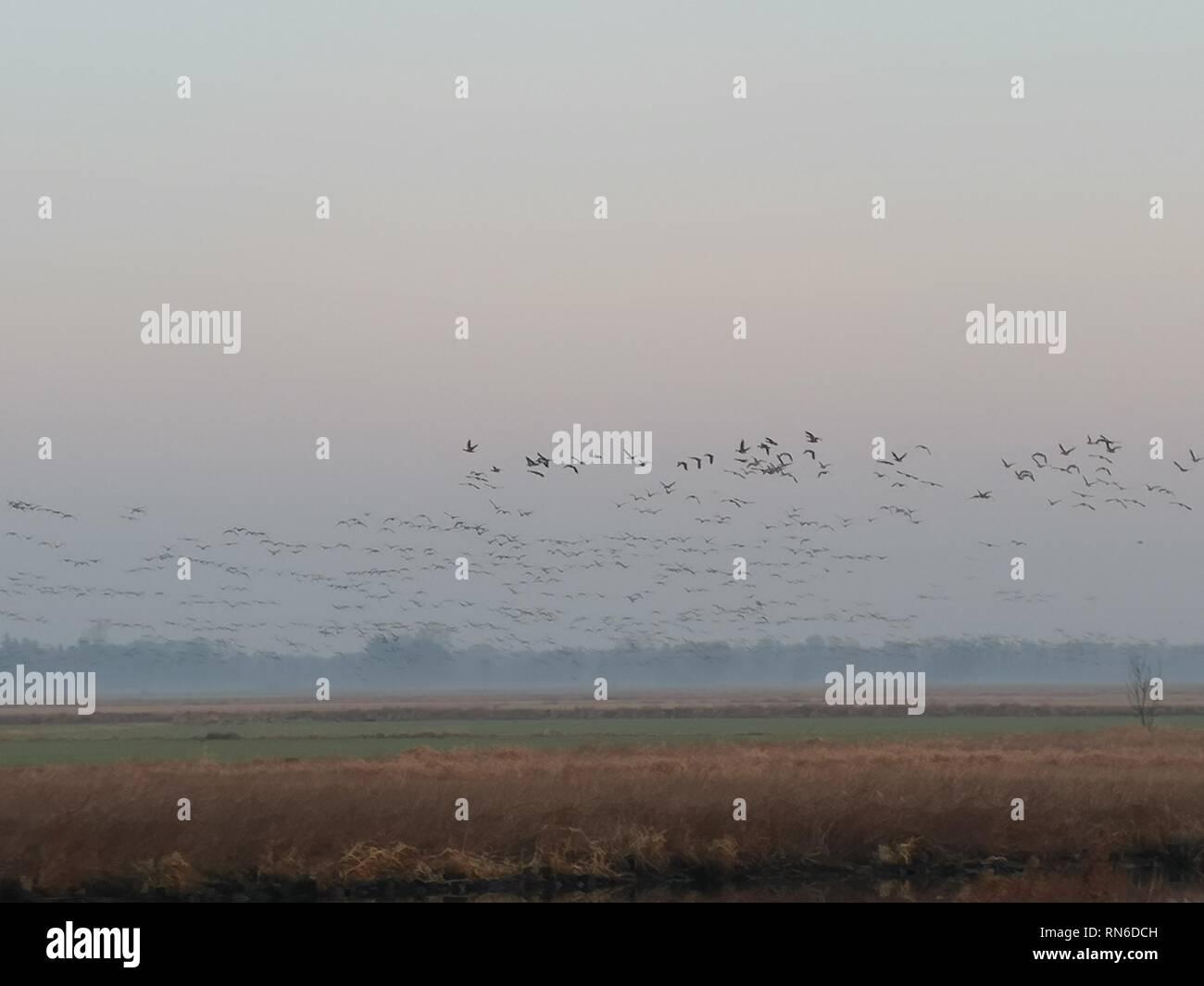 Wildvögel im Morgennebel, Landschaft, Morgengrau Stock Photo