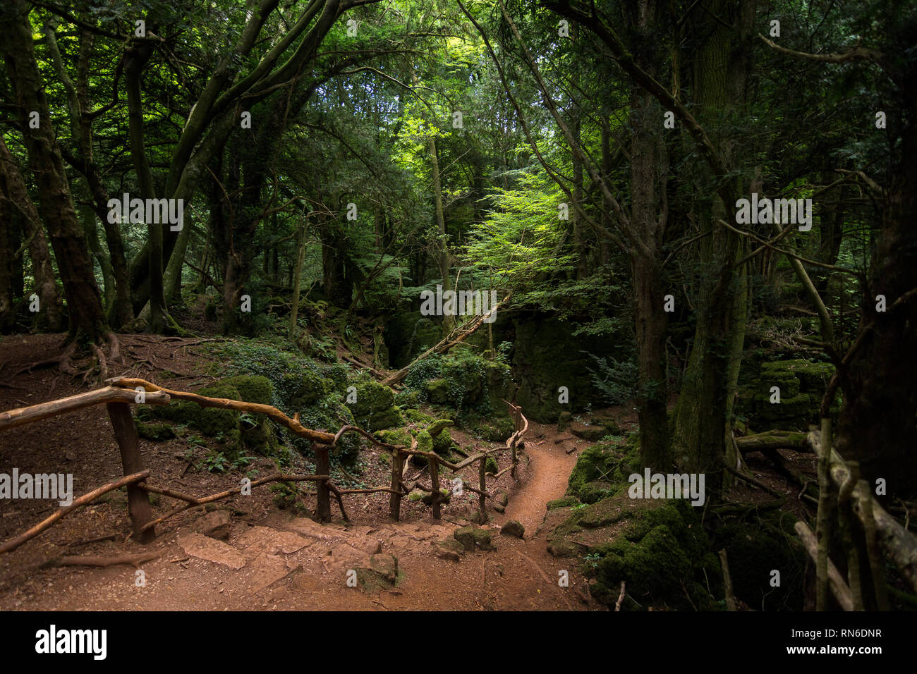A basic dirt path down steps leads deep in to the dark Puzzlewood forest, Coleford, England. - Stock Image