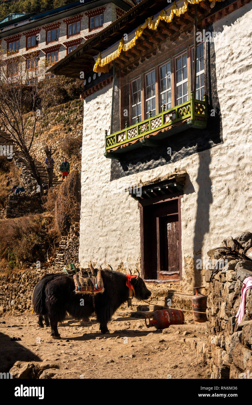 Nepal, Namche Bazaar, Yaks with decorated harnesses below traditionally designed local house - Stock Image