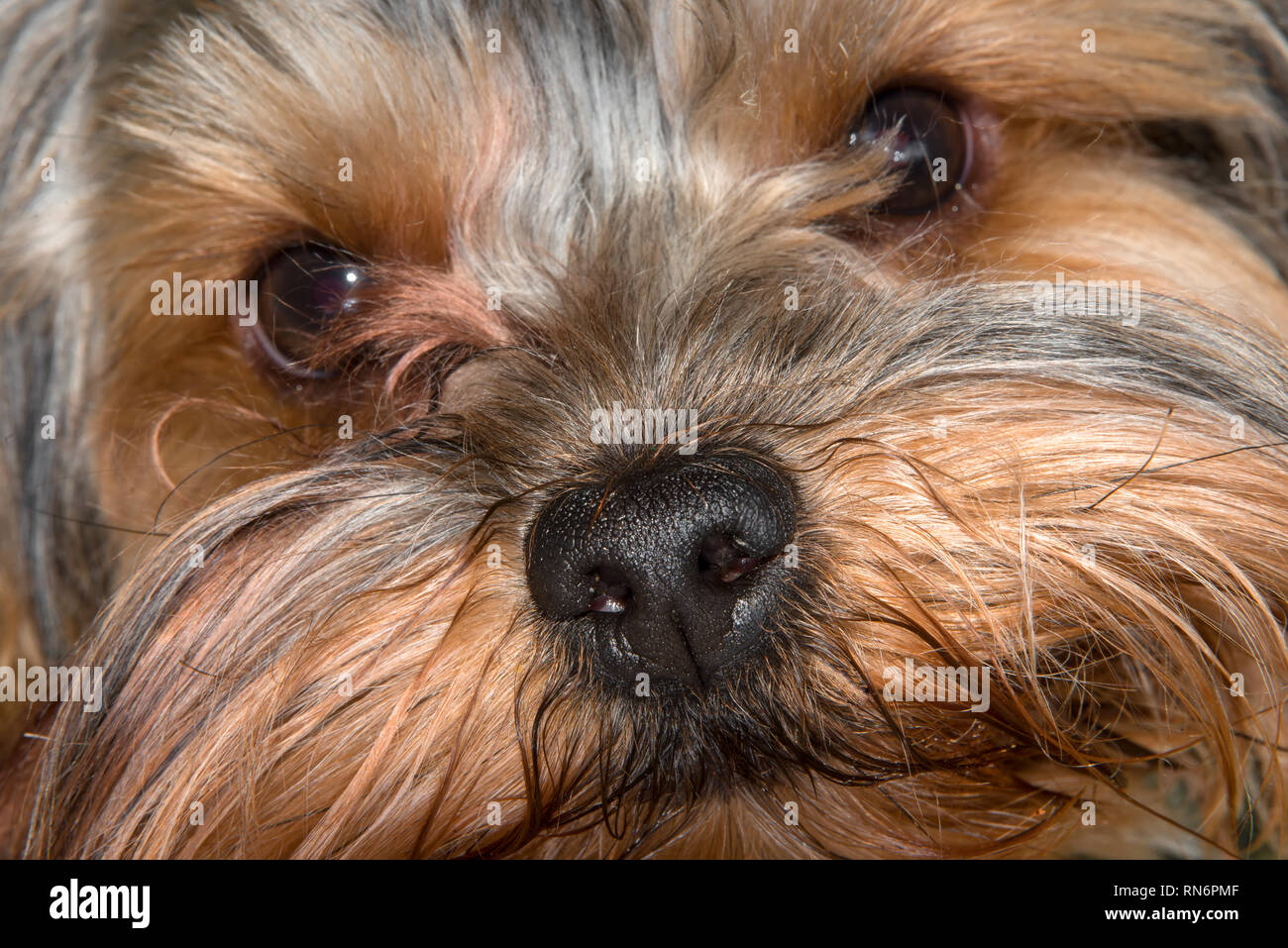 shaggy Stock Photos & 'shaggy Stock Images - Page 29 - Alamy