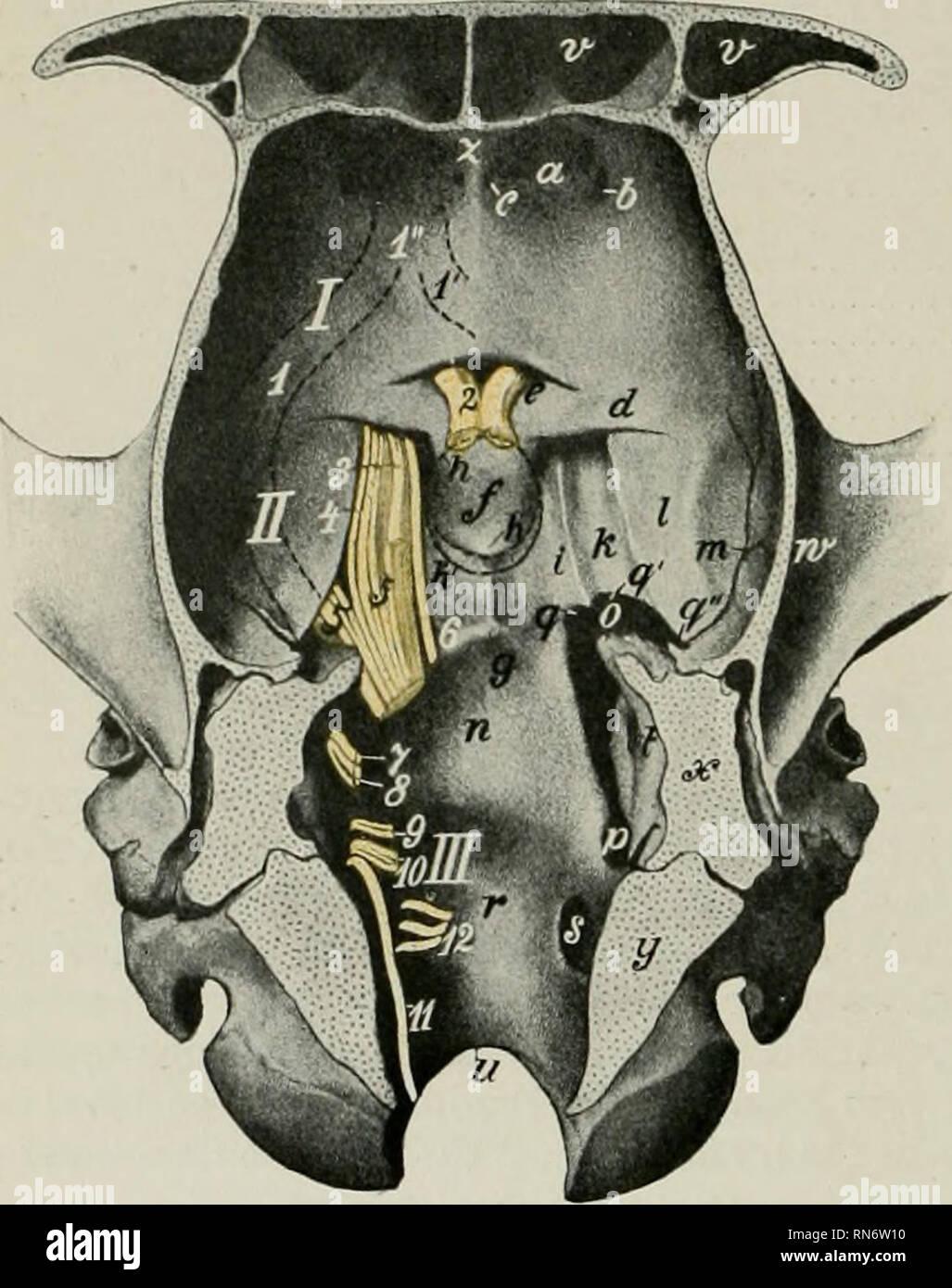 The Anatomy Of The Domestic Animals Veterinary Anatomy 794 Nervous