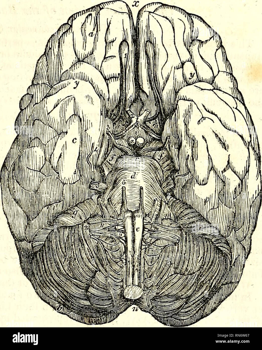 The Anatomy Of The Human Body Human Anatomy Anatomy The Base Of