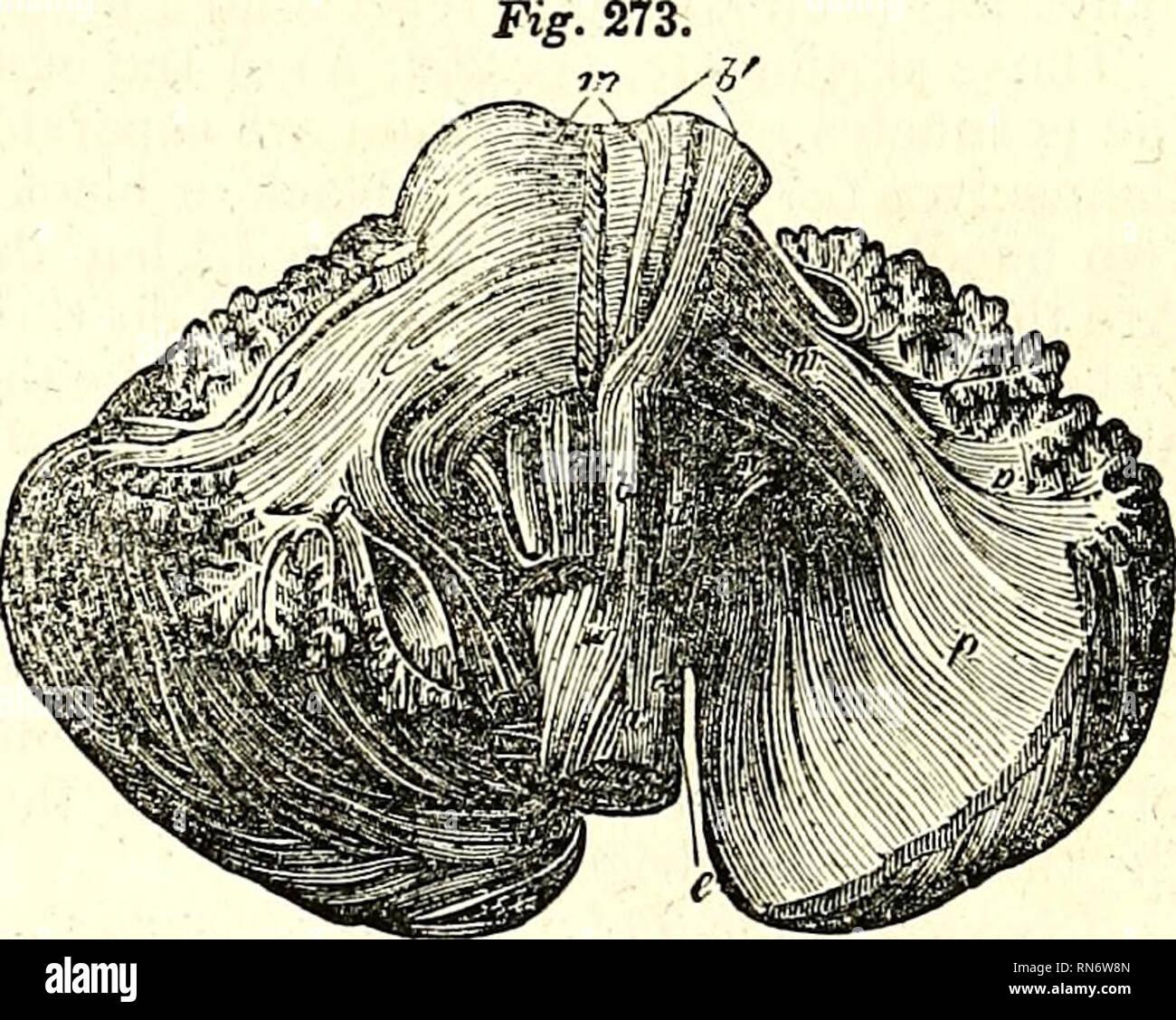 The Anatomy Of The Human Body Human Anatomy Anatomy Internal