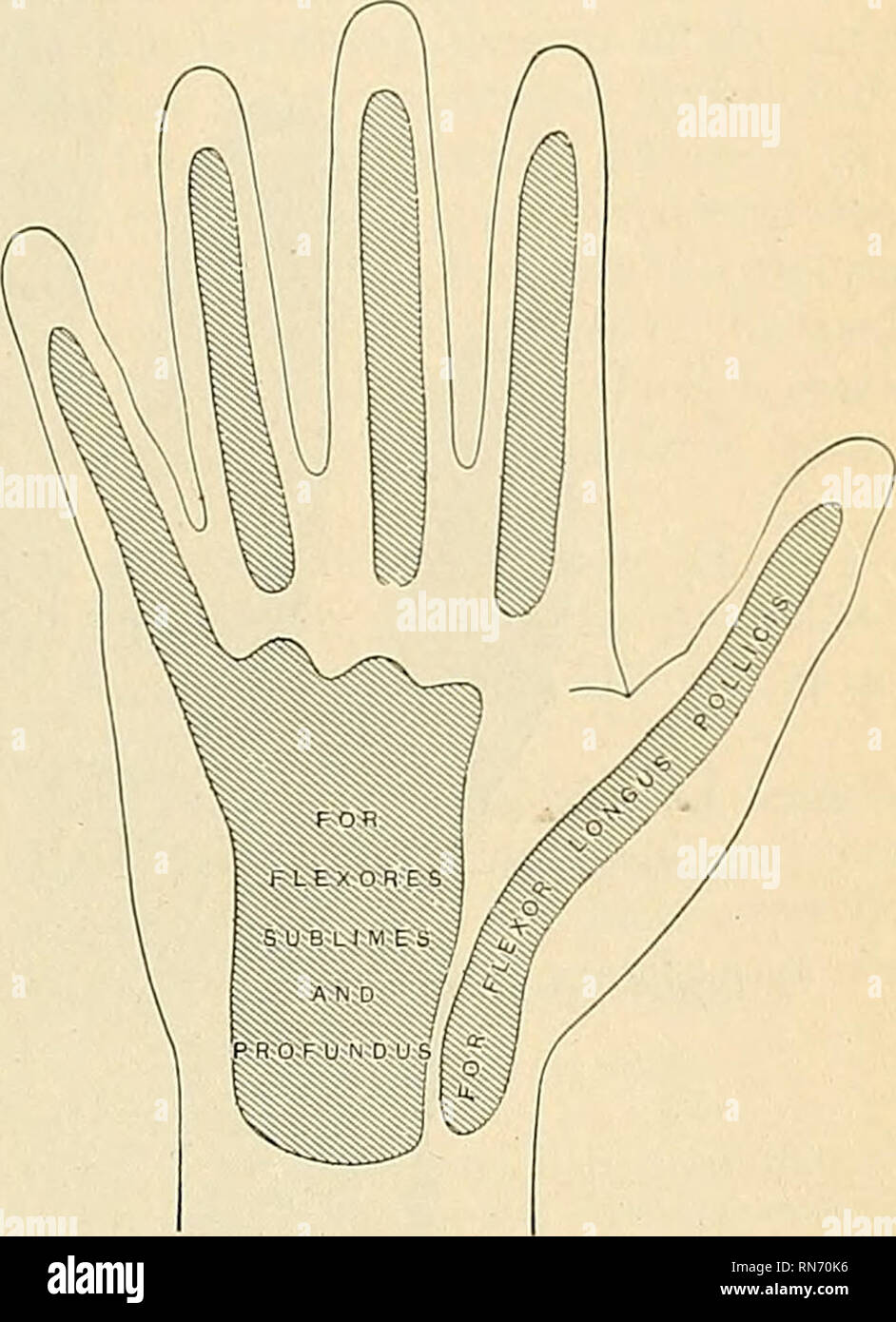 Anatomy Descriptive And Applied Anatomy Of The Hand 487 Of