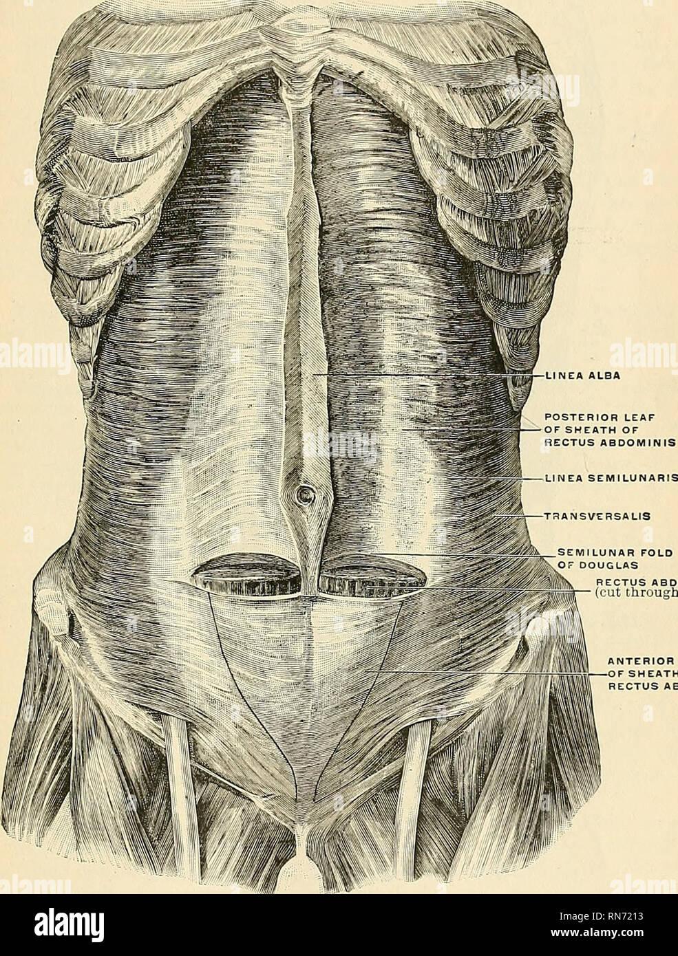 kremastermuskel