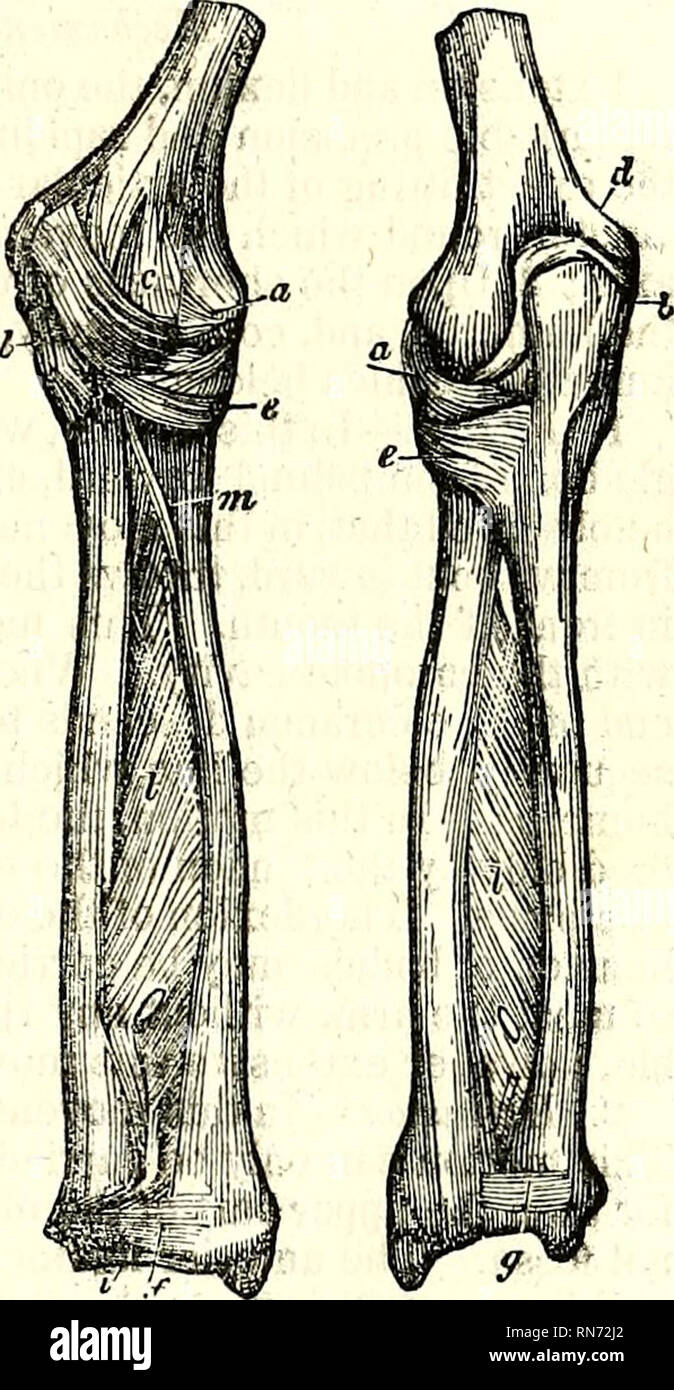 The Anatomy Of The Human Body Human Anatomy Anatomy Articulations
