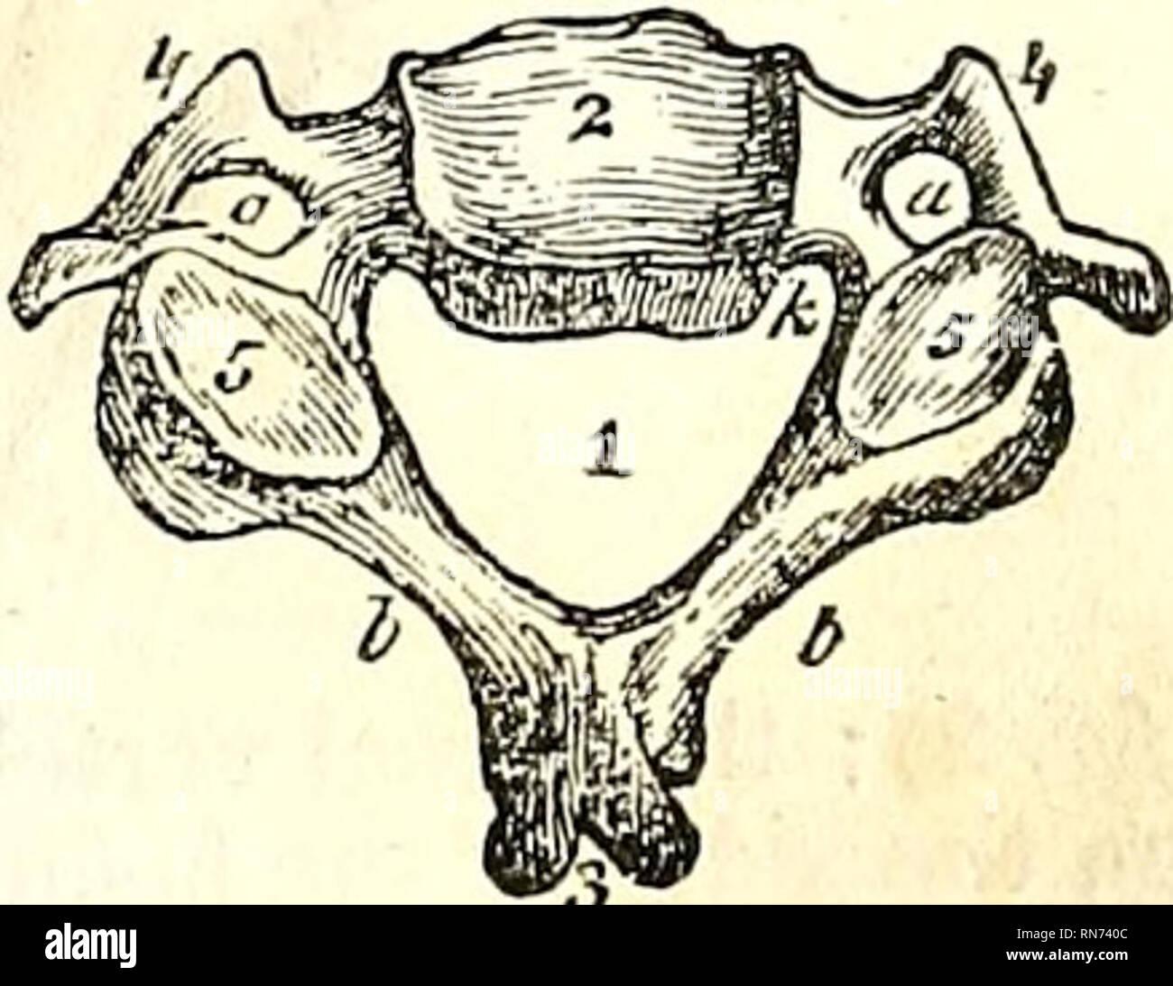 The Anatomy Of The Human Body Human Anatomy Anatomy The Vertebral