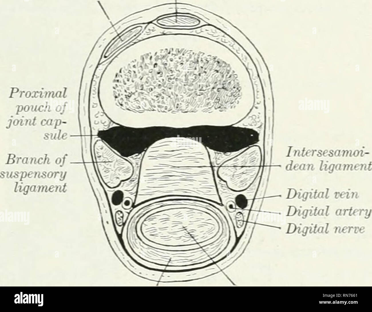 Humeral Head Stock Photos Humeral Head Stock Images Alamy