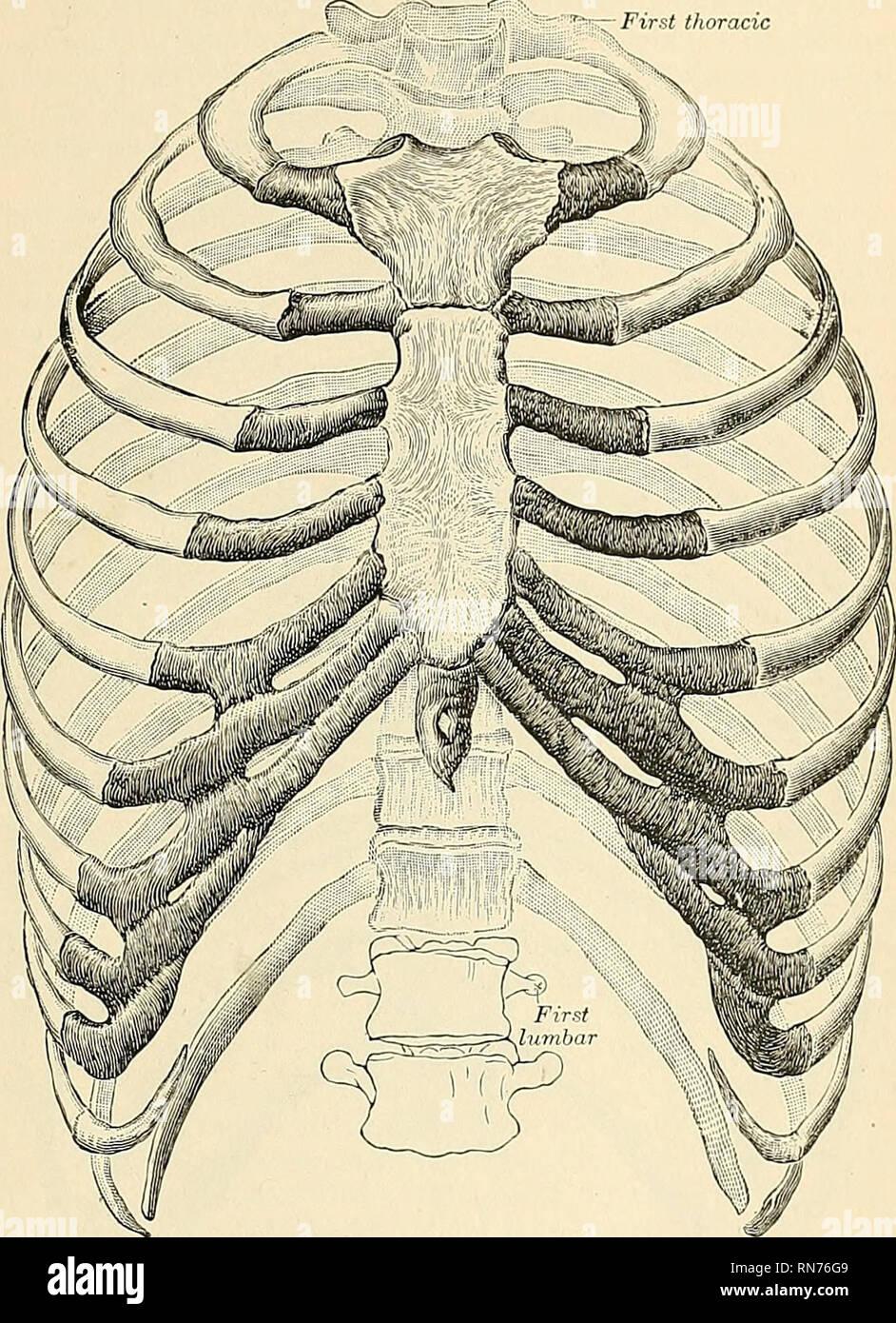 apertura thoracis superior