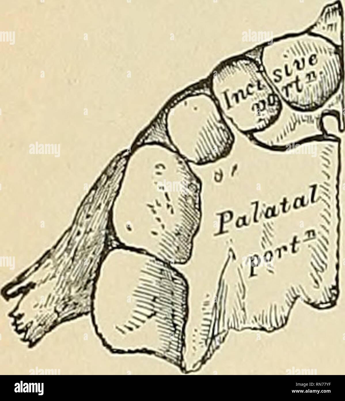Anatomy Descriptive And Applied Anatomy Anterior Surjace Portion
