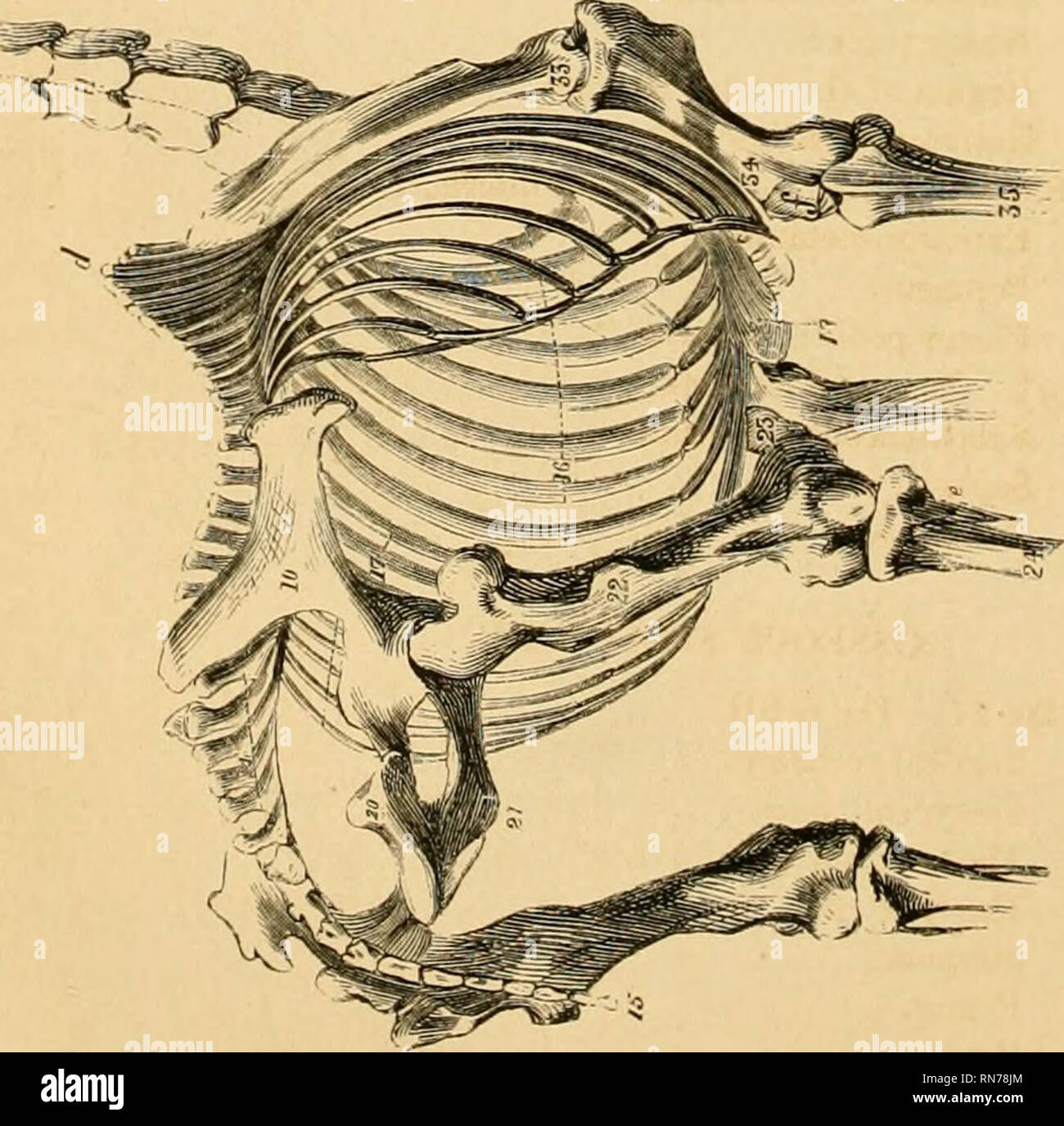 The Anatomy And Physiology Of The Horse With Anatomical And Questional Illustrations Containing Also A Series Of Examinations On Equine Anatomy And Physiology With Instructions In Reference To Dissection