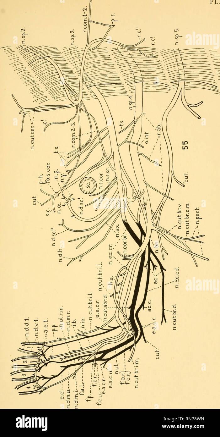 Salamander Anatomy Stock Photos & Salamander Anatomy Stock Images