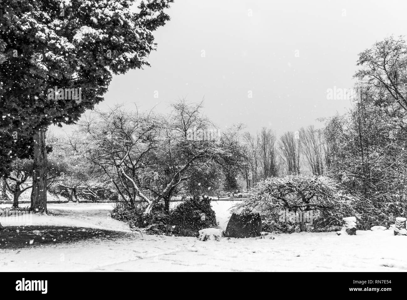 Snow fall around tree on a hill in West Seattle, Washington. - Stock Image