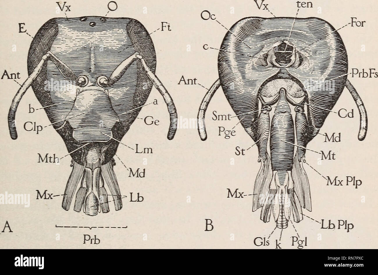 The Anatomy Of The Honey Bee Insects Bees Bees Anatomy Honeybee