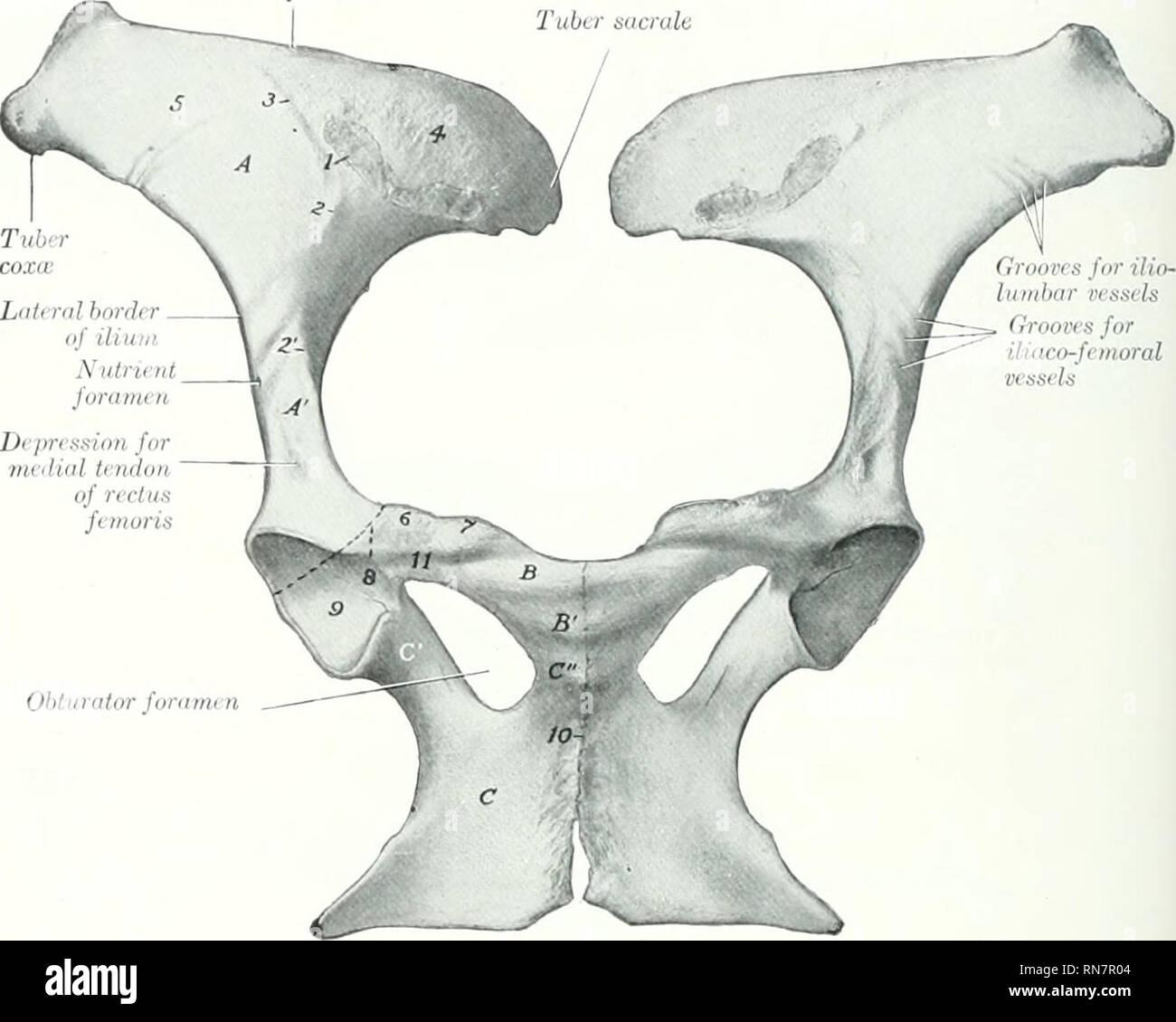 The Anatomy Of The Domestic Animals Veterinary Anatomy Los The
