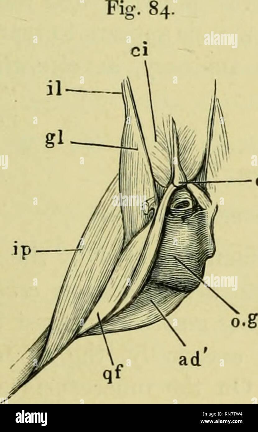The Anatomy Of The Frog Frogs Anatomy Amphibians Anatomy