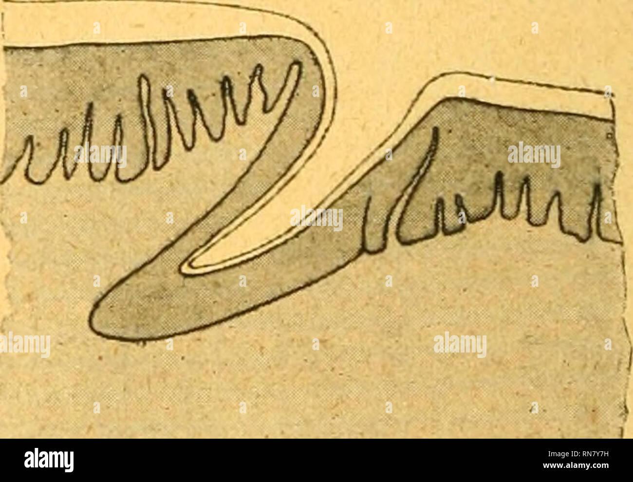Anatomischer Anzeiger Anatomy Comparative Anatomy Comparative