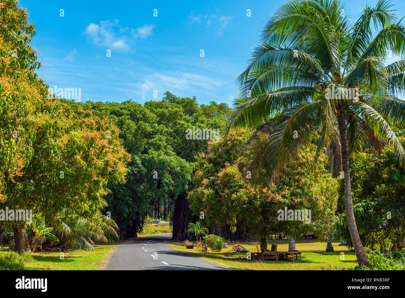 View of the road through the trees and creepers, Aitutaki Island, Cook Islands - Stock Image