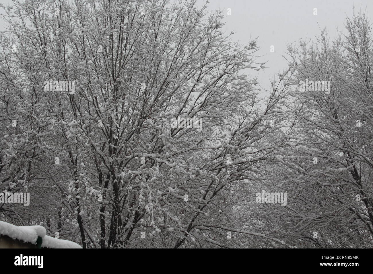 A picture of random trees taken in a snowy morning in Kabul, Afghanistan. - Stock Image