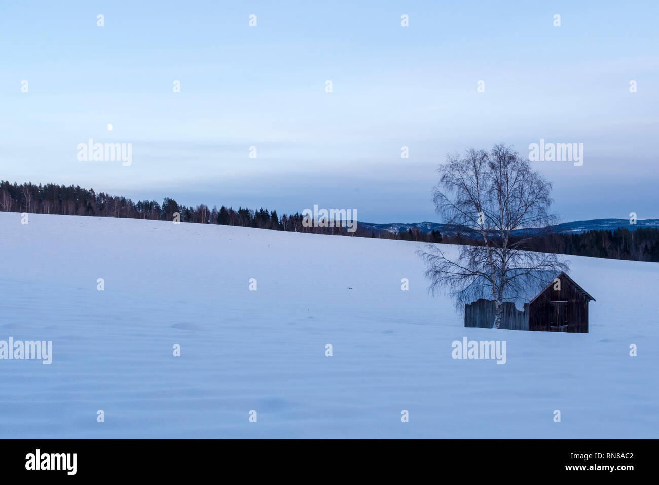 Old barn and a birch on a snowcovered meadow with forest in background and a sky with the moon visible, picture from Northern Sweden. - Stock Image