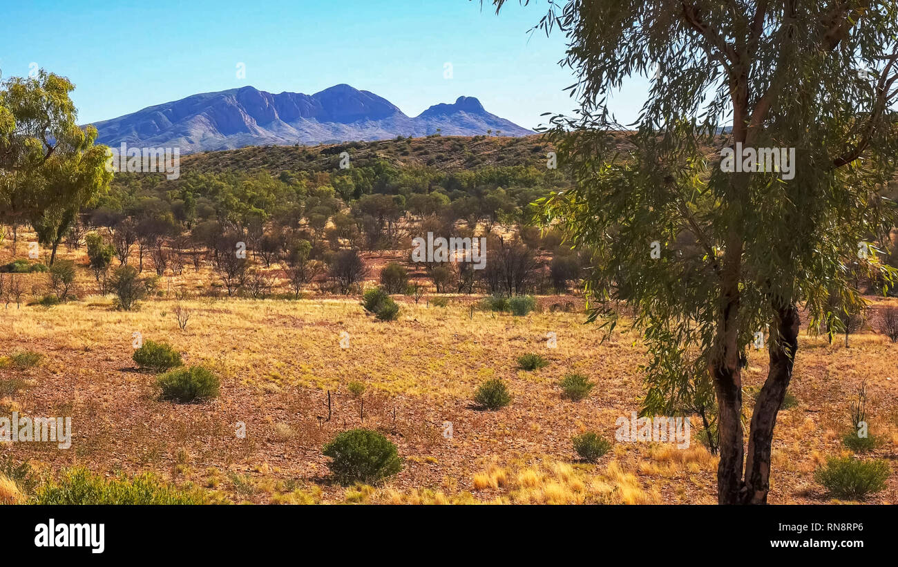 a morning shot of mount sonder and gum trees in the nt - Stock Image