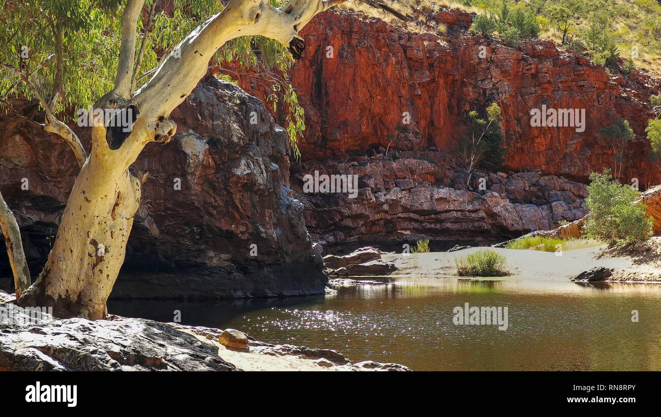 a ghost gum and sunlight on the water of ormiston gorge in the west macdonnell ranges - Stock Image