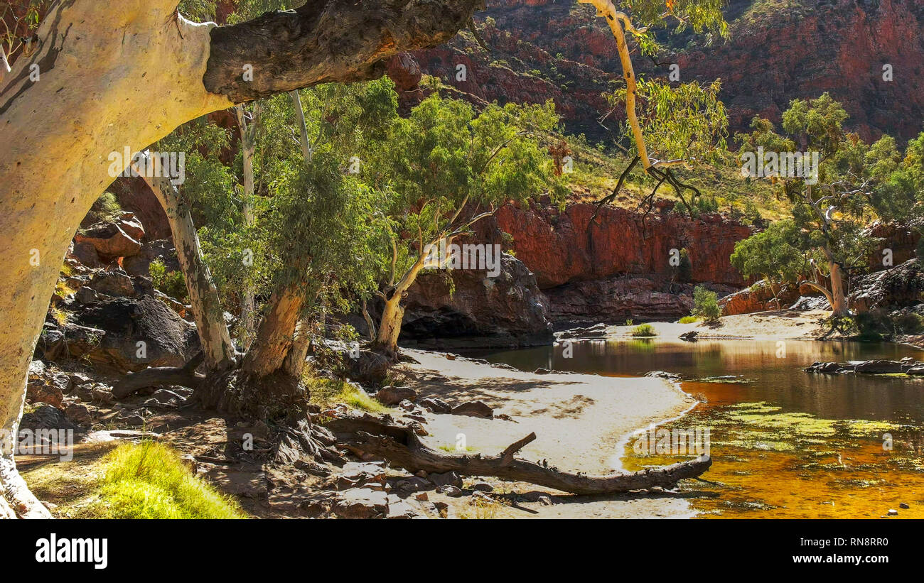 a ghost gum at the waterhole at ormiston gorge in the west macdonnell ranges Stock Photo