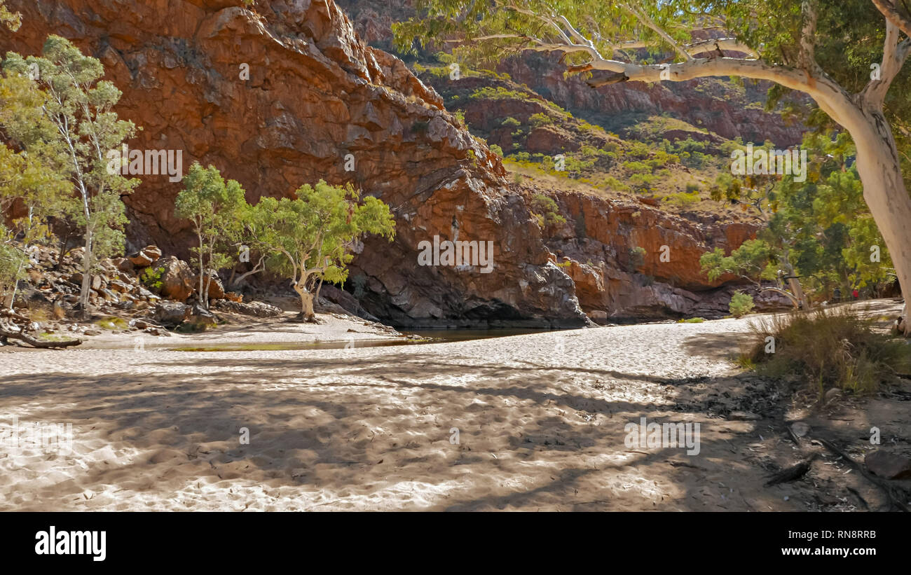 a long shot of ghost gums growing at ormiston gorge - Stock Image