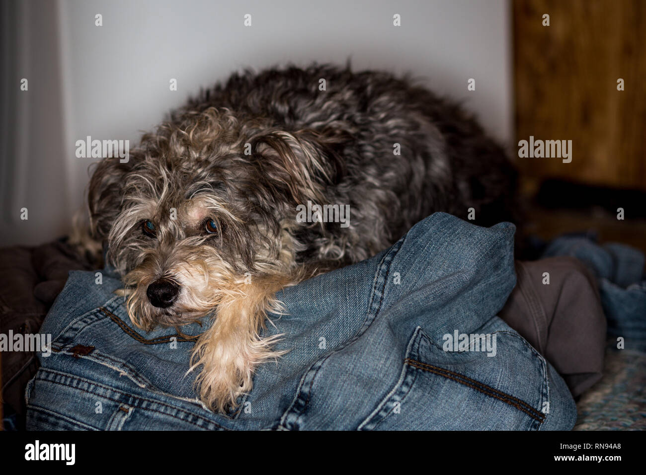 Doing laundry with pets. - Stock Image