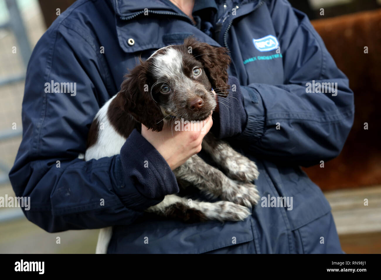 RSPCA staff working with dogs at the Mount Noddy Animal Centre in West Sussex, UK. - Stock Image