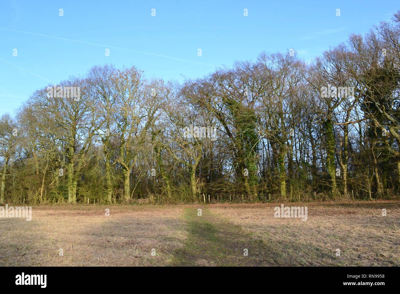 Austin Spring wood near Romney Street, Kent on a strangely warm February day. Popular walking route between Shoreham, Eynsford or Otford and Sevenoaks - Stock Image