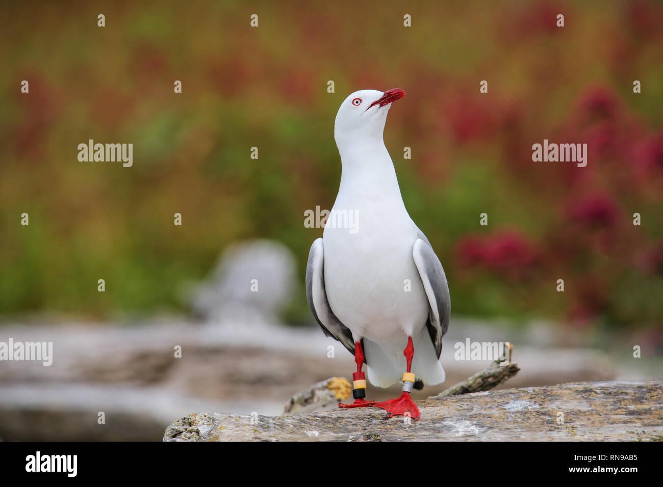 Bird Identification Stock Photos & Bird Identification Stock